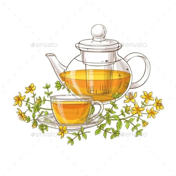 Tutsan Tea Vector Illustration on White Background - Health/Medicine Conceptual