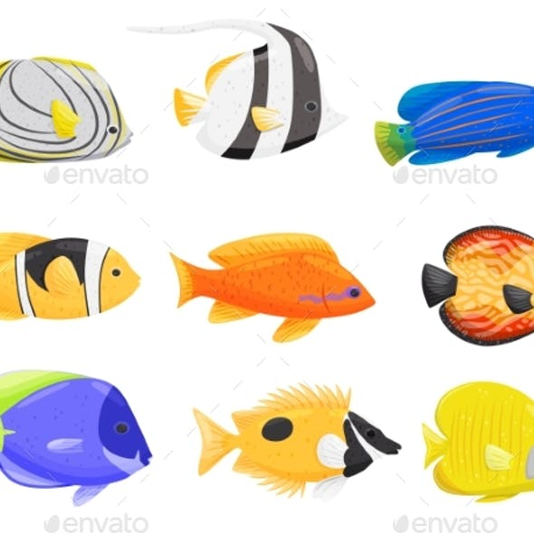 Collection of Colorful Fish on White Background