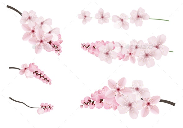 Dark and Light Pink Sakura Flowers - Flowers & Plants Nature