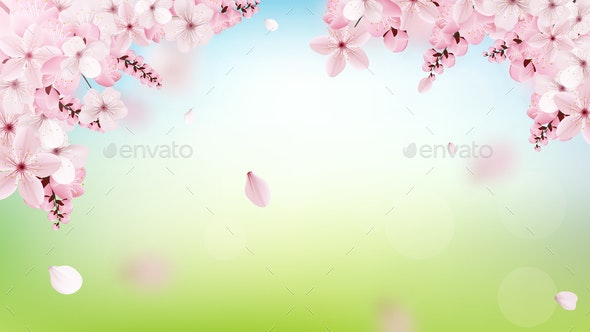 Background with Blossoming Light Pink Sakura Flowers - Landscapes Nature