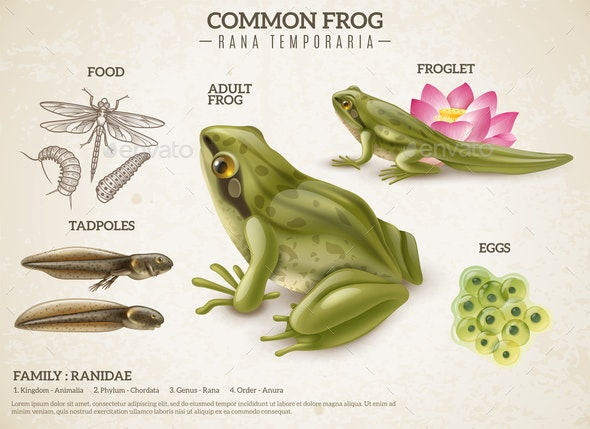 Frog Life Cycle Retro Poster - Nature Conceptual