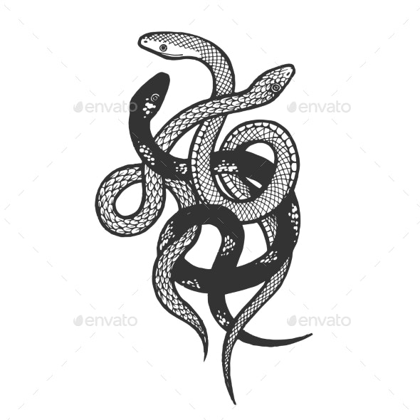 Binded Snakes Sketch Engraving Vector - Animals Characters
