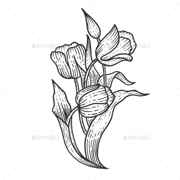 Tulip Flowers Sketch Engraving Vector - Food Objects