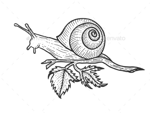 Snail Animal Sketch Engraving Vector - Miscellaneous Vectors