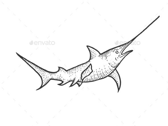 Swordfish Sketch Engraving Vector Illustration - Animals Characters