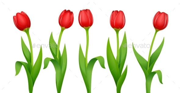 Tulip Decorative Garden Spring Flower - Flowers & Plants Nature