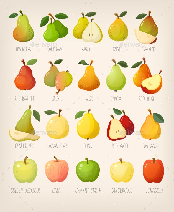 Kinds of Pears with Names - Food Objects