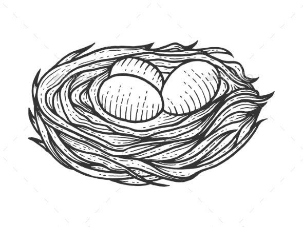 Nest with Eggs Sketch Engraving Vector - Miscellaneous Vectors