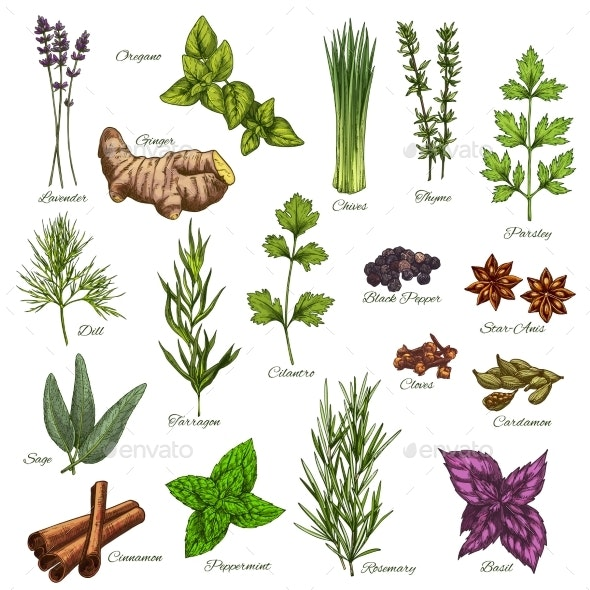 Vector Isolated Icons of Natural Spices and Herbs - Food Objects