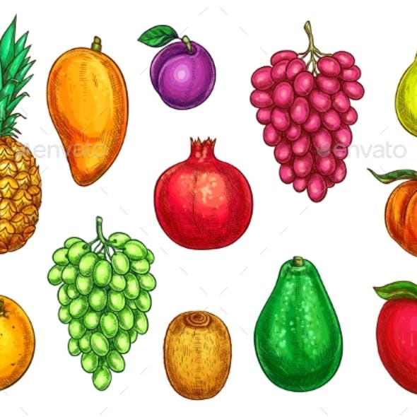 Vector Isolated Icons of Exotic Garden Fruits