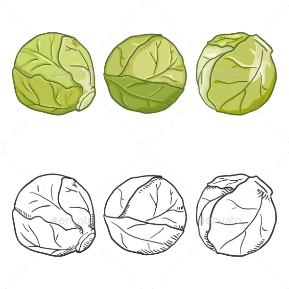 Vector Set of Cartoon and Sketch Brussels Sprouts - Food Objects