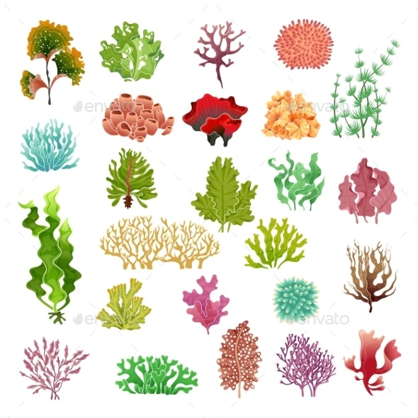 Coral and Seaweed Underwater Flora in Sea Water - Animals Characters