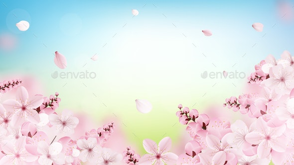 Background with Blossoming Light Pink Sakura Flowers - Flowers & Plants Nature