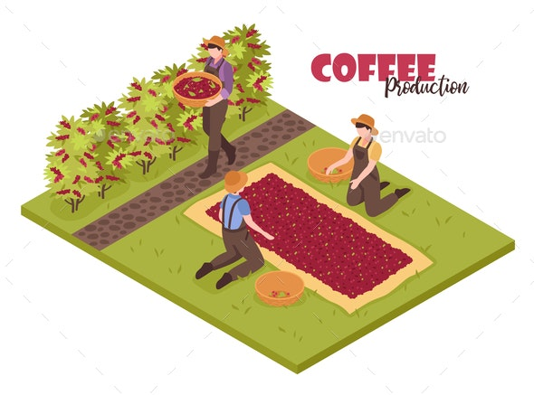 Coffee Plantation Isometric Background - Industries Business
