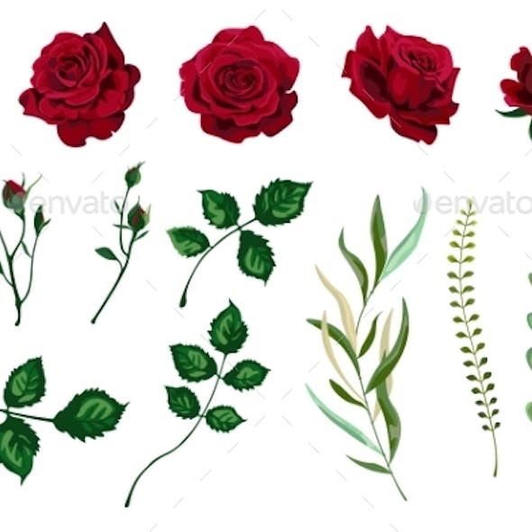 Vector Roses
