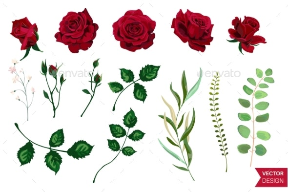 Vector Roses - Flowers & Plants Nature