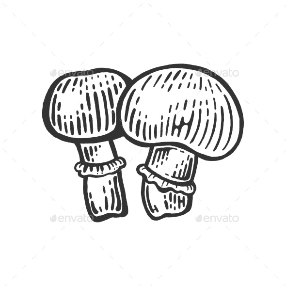 Porcini Mushroom Sketch Engraving Vector - Food Objects