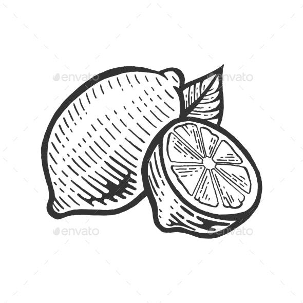 Lemon Citrus Sketch Engraving Vector Illustration - Food Objects