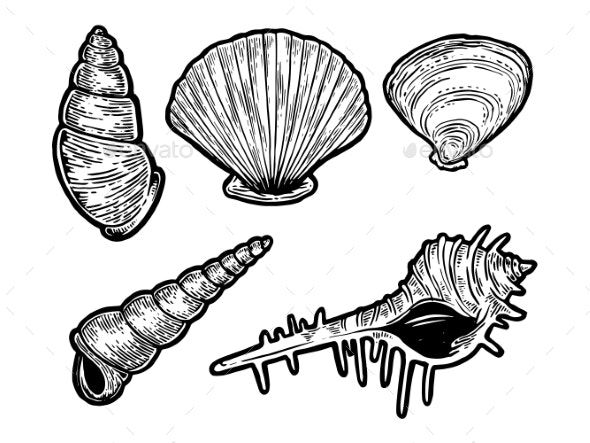 Sea Shell Set Sketch Engraving Vector - Organic Objects Objects