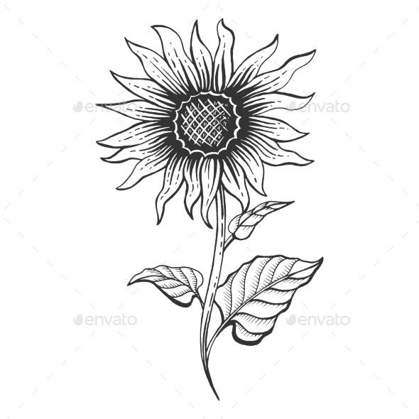 Sunflower Plant Sketch Engraving Vector - Flowers & Plants Nature