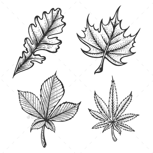 Plant Leaves Sketch Engraving Vector - Flowers & Plants Nature