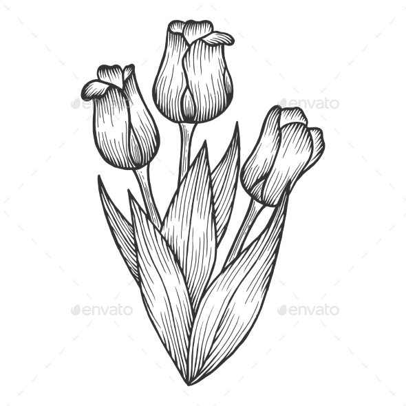 Tulip Flowers Sketch Engraving Vector - Flowers & Plants Nature