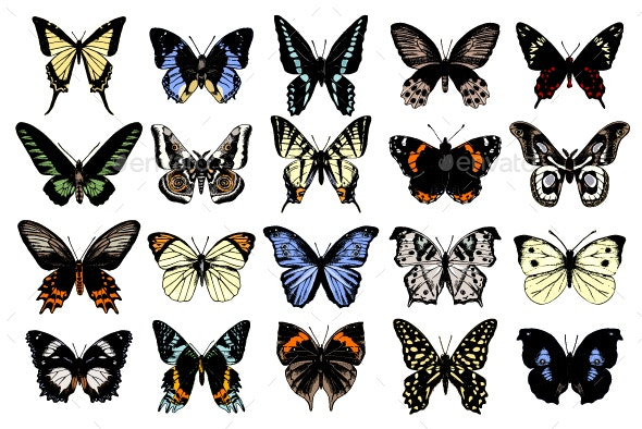 Butterflies Collection - Animals Characters