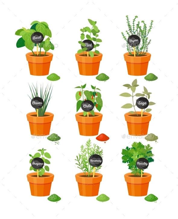 Set of Useful Herbs in Brown Pots with Labels - Flowers & Plants Nature