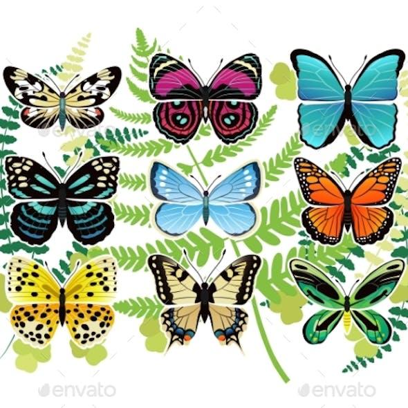 Tropical Butterflies Spescies Illustrations Set
