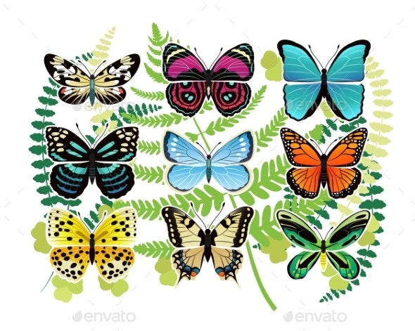 Tropical Butterflies Spescies Illustrations Set - Animals Characters