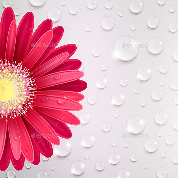 Gerbera Flower on a Background of Water Droplets - Flowers & Plants Nature