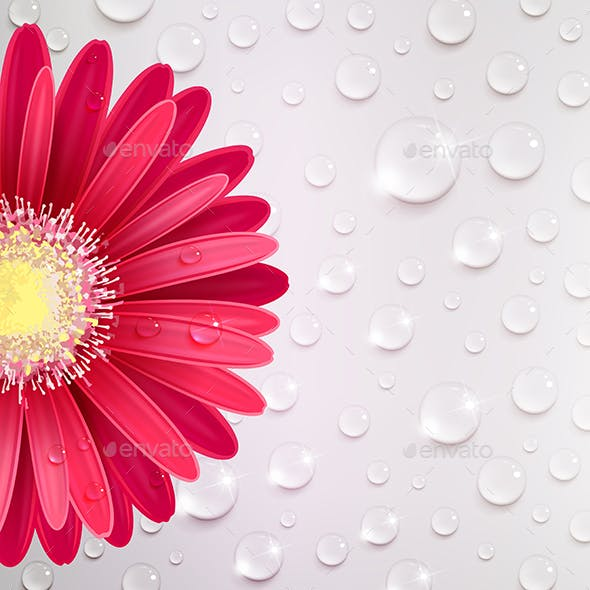 Gerbera Flower on a Background of Water Droplets