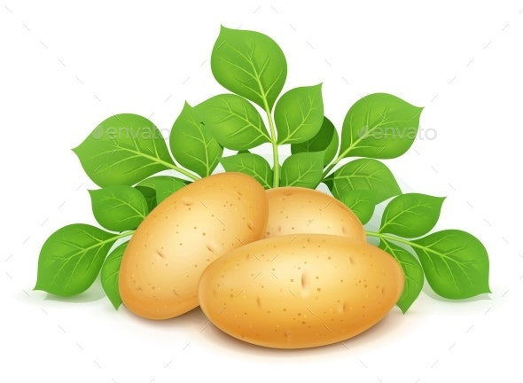 Three Potatoes with Leaves - Food Objects