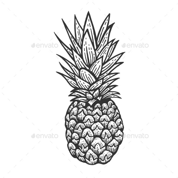 Pineapple Sketch Engraving Vector - Food Objects