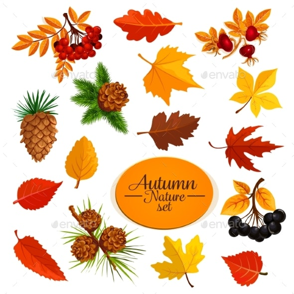 Autumn Vector Icons of Leaf Fall or Forest Berry - Seasons Nature