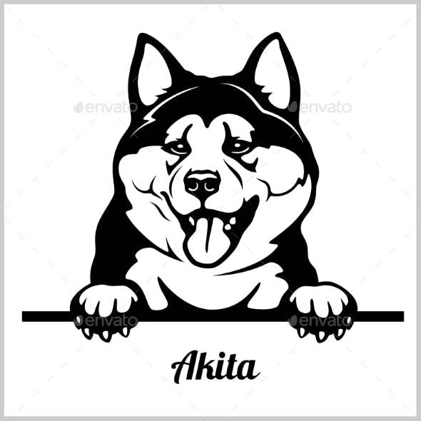 Akita Peeking Dog