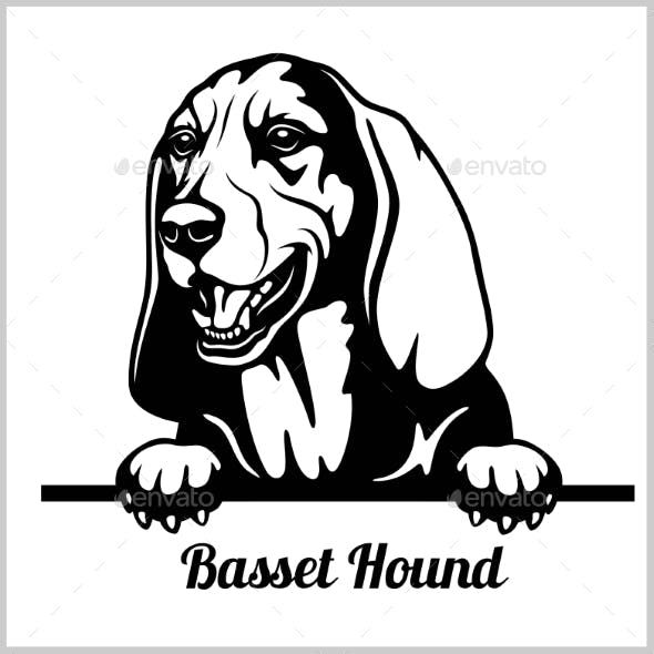 Basset Hound Peeking Dog