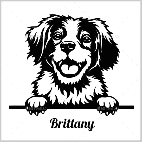 Brittany Peeking Dog