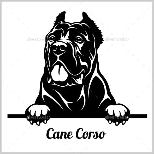 Cane Corso Peeking Dog