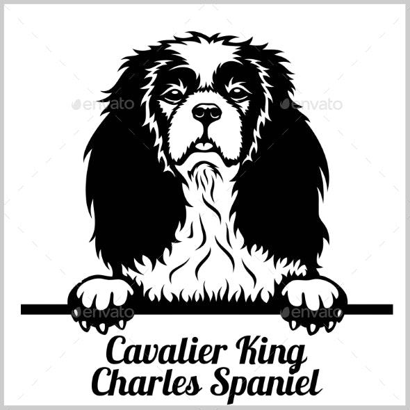 Cavalier King Charles Spaniel Peeking Dog - Animals Characters