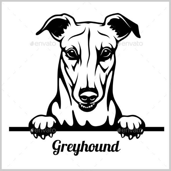 Greyhound Peeking Dog - Animals Characters