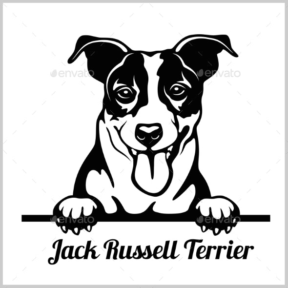 Jack Russell Terrier Peeking Dog - Animals Characters