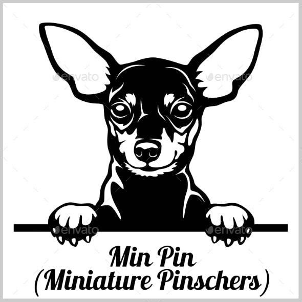 Min Pin Peeking Dog