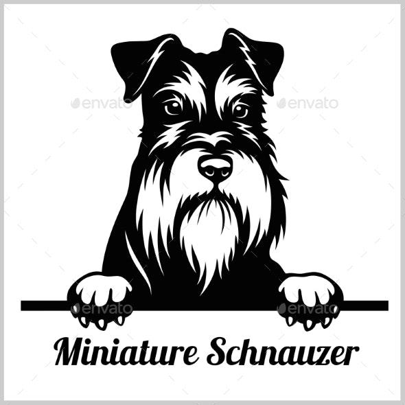 Miniature Schnauzer Peeking Dog - Animals Characters