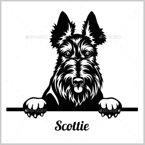 Scottie Peeking Dog