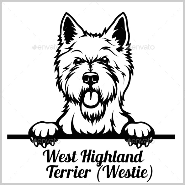 West Highland Terrier Peeking Dog - Animals Characters