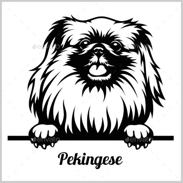 Pekingese Peeking Dog