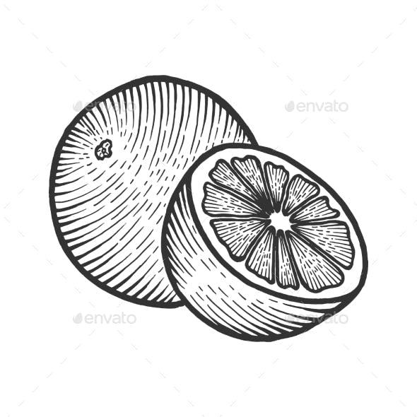 Orange Citrus Sketch Engraving Vector