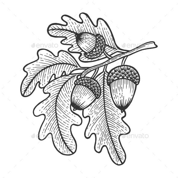 Oak Branch with Acorns Sketch Engraving Vector - Miscellaneous Vectors