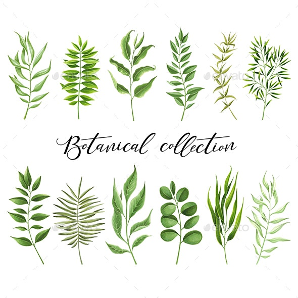 Botanical Collection - Illustrations Graphics